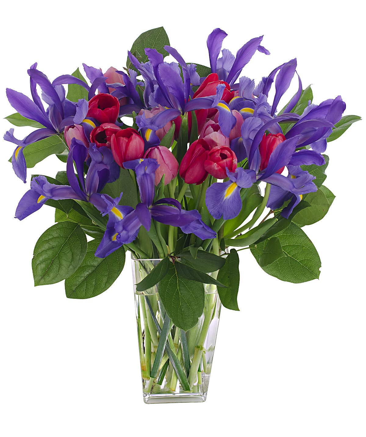 Stargazer Barn Big Hug Bouquet 26 Stems of Tulips and Telstar Iris with Clear Vase