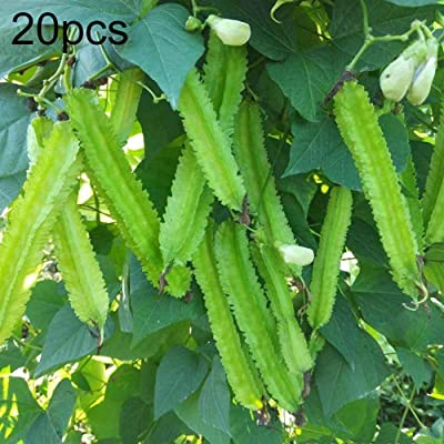 Mggsndi 20Pcs Rare Winged Bean Seeds Non-GMO Vegetable Plant Easy Grow for Garden Farm Field Winged Bean Seeds : Garden & Outdoor