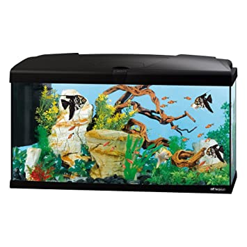 Ferplast 65018017 Acuario Capri 80, medidas: 80 x 31,5 x 46,5 cm, 100 litros, color negro: Amazon.es: Productos para mascotas