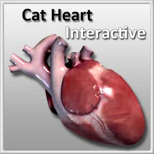 Cat Heart Interactive
