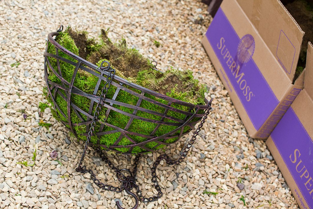 SuperMoss (21598) Sheet Moss Preserved, Fresh Green Wet Use (20-24 sq. ft. Approx 3.5lbs) by Super Moss (Image #4)