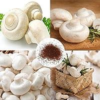 Semillas blanco de setas, semillas de 100 piezas / bolsa blanca de la seta Productivos nutritivo esporas freza plántulas…
