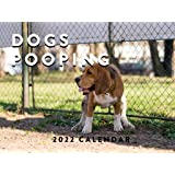Dogs Pooping 2022 Wall Calendar Funny Animals Gag Gift Nature Calls Pooping Pooches Large 18 Month Calendar Monthly Full Colo