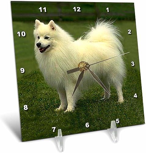3dRose Dogs American Eskimo – American Eskimo – 6×6 Desk Clock dc_642_1