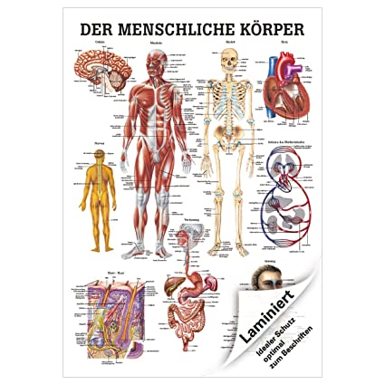 Ausgezeichnet Karte Der Menschlichen Körper Organe Galerie ...