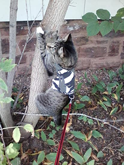 Arnés para gatos, de Mynwood, con diseño de camuflaje polar, para ...