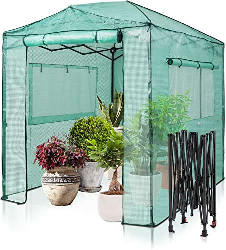 EAGLE PEAK 8 x6 Portable Walk-in Greenhouse Instant Pop-up Fast Setup Indoor Outdoor Plant Gardening Greenhouse Canopy, Front and Rear Roll-Up Zipper Entry Doors and 2 Large Roll-Up Side Windows