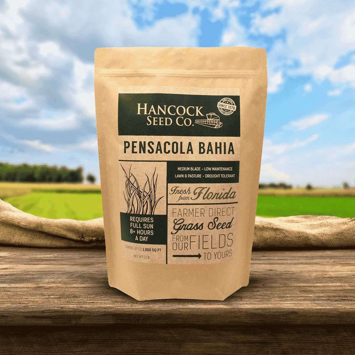 Hancock's Pensacola Bahia Grass Seed (Coated) by Hancock Seed Company