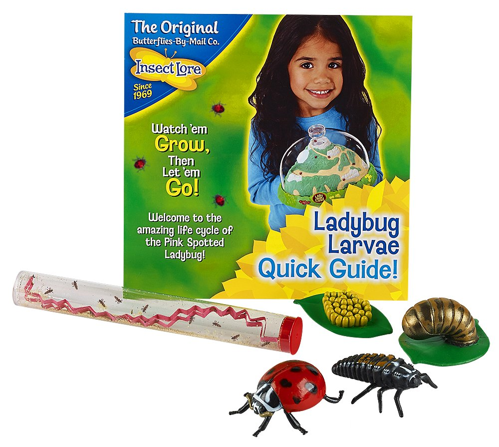 Insect Lore Live Baby Ladybug Larvae - Ladybug Growing Kit REFILL with Ladybug Life Cycle Toy Figurines - SHIP NOW by Insect Lore (Image #1)