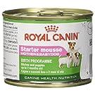 Royal Canin Hundefutter Starter mousse