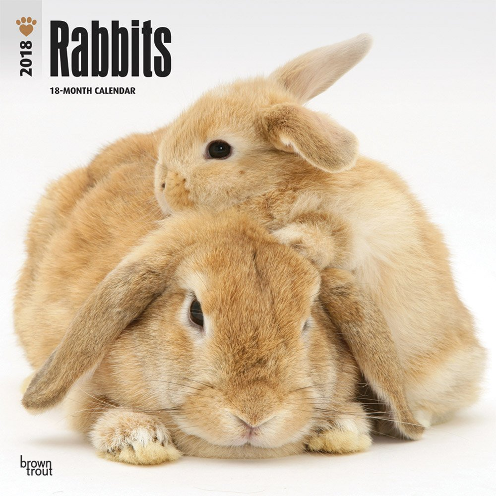 Rabbits 2018 12 x 12 Inch Monthly Square Wall Calendar, Domestic Pet Animals (Multilingual Edition)