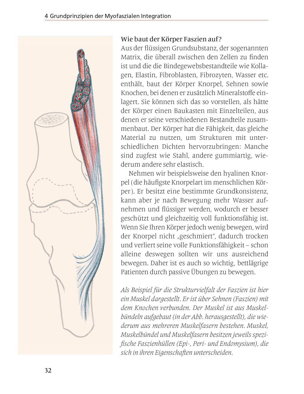 Fantastisch Strecksehnen Der Hand Anatomie Ideen - Menschliche ...