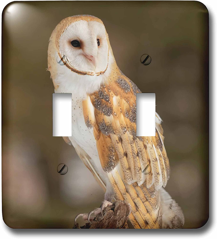 Tyto Alba Montana Toggle Switch Multicolor 3dRose lsp/_279158/_2 Barn Owl
