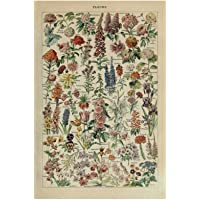 Vintage Adolphe Millot Encyclopedia Posters Butterfly Mushrooms Herbs Flowers Insect Classic Wall Stickers Vintage…