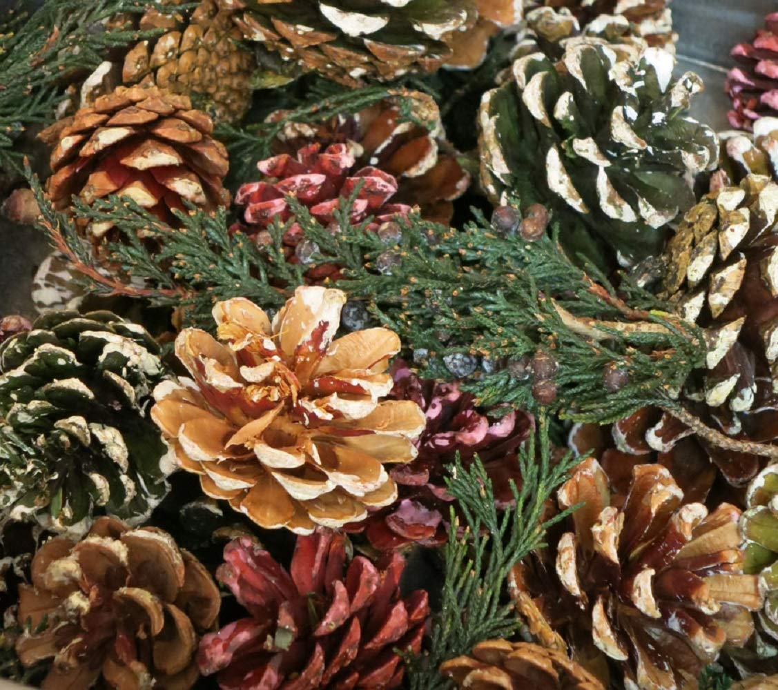 Little Valley Frosted Short Needle Pinecone Potpourri - Cinnamon Scent Large 1 lb Bag - Perfect for Bowl Fillers, Fall, Winter or Christmas Decore by Little Valley (Image #1)
