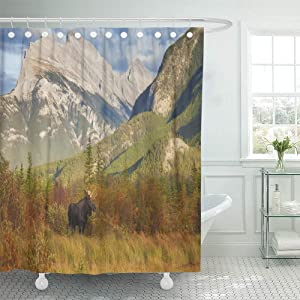 Shower Curtain Set Waterproof Adjustable Polyester Fabric Bull Moose Wanders Through The Vermillion Lakes in Banff National Park Alberta 72 x 84 Inches Set with Hooks for Bathroom