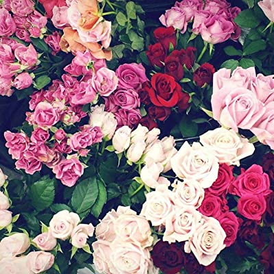 100pcs Rose Seeds Rare Colorful Flower Seeds Easy to Grow Seeds for Home Garden : Garden & Outdoor