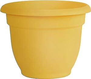 "Bloem AP0623 Ariana Self Watering Planter 6"" Earthy Yellow, 6"""