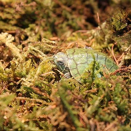 Terrarium Decor Popular 100g Natural Terrarium Moss Reptile Turtle