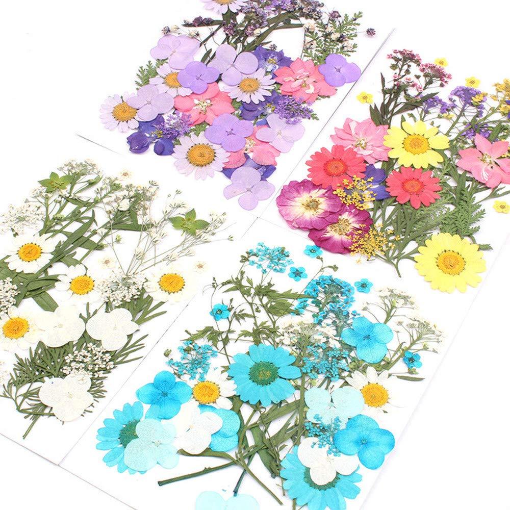 OSAYES Flores secas Naturales org/ánicos Mezclados Flor prensada DIY Decoraciones Florales Scrapbooking Arte Manualidades del hogar Decoracion de la Boda Diferente