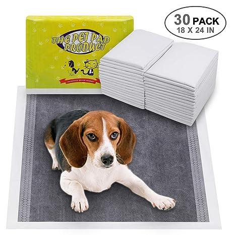 micción frecuente cachorro beagle