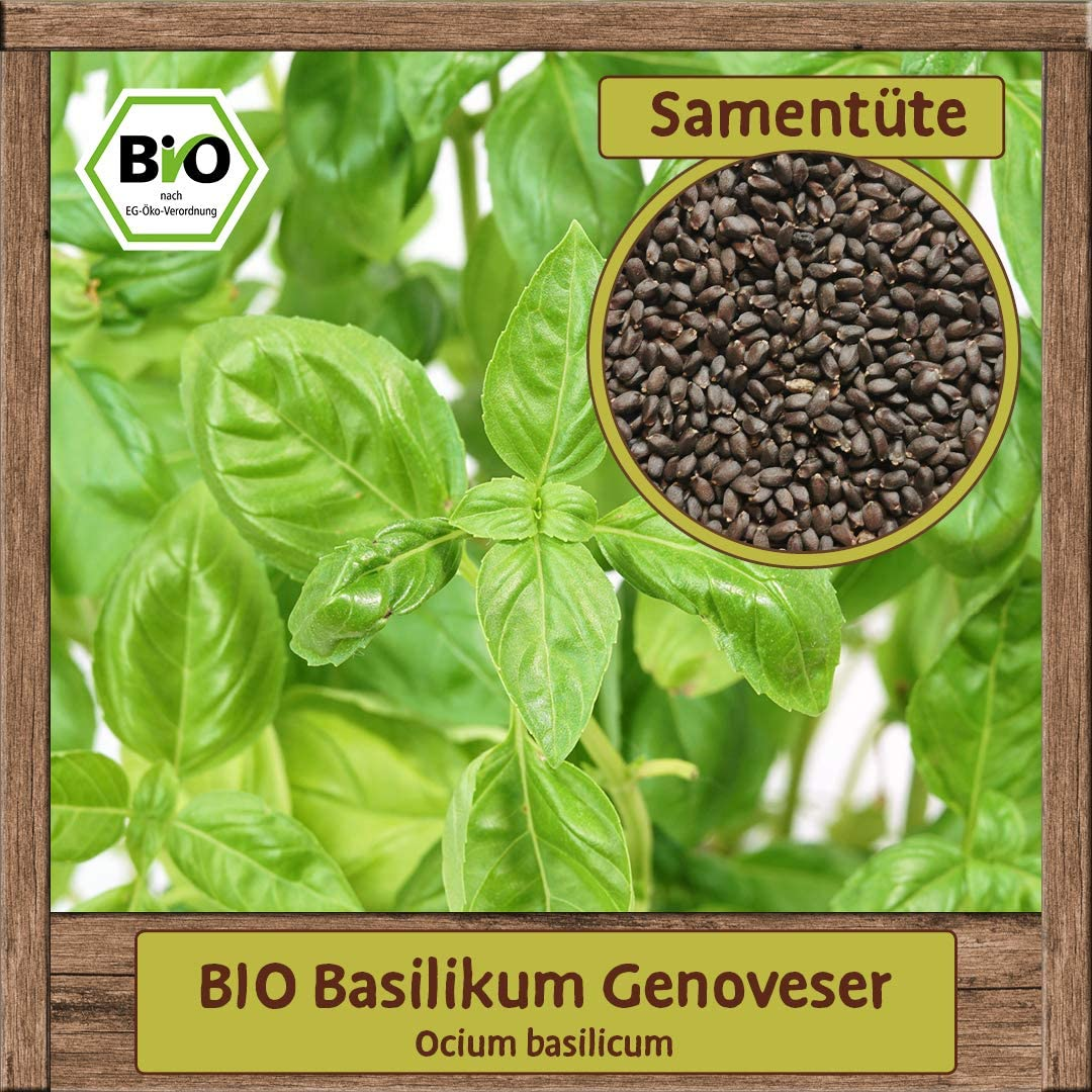 BIO Basilikum-Samen ocimum basilicum K/üchenkraut Sorte Genoveser Saatgut gr/ö/ßbl/ättrig
