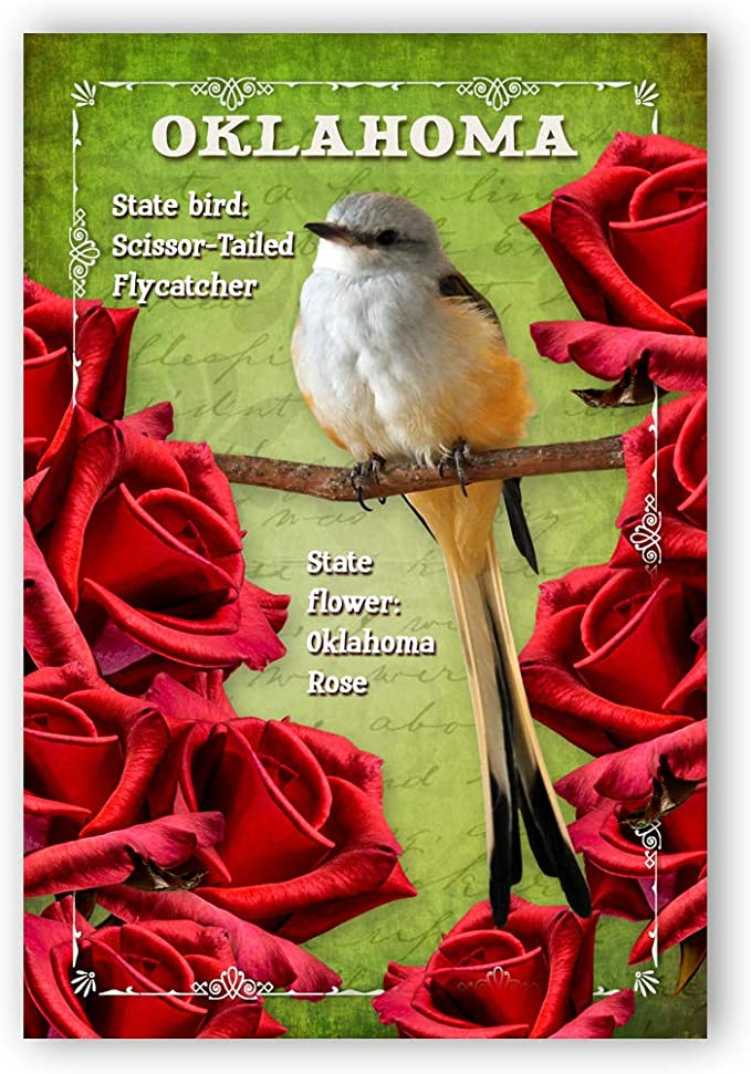 Amazon Com Oklahoma Bird And Flower Postcard Set Of 20 Identical Postcards Ok State Symbols Post Cards Made In Usa Office Products