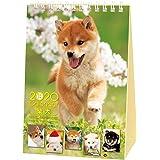 アクティブコーポレーション 2020年 カレンダー 犬 柴犬 卓上 森田米雄 まるごと柴犬 ACL-543