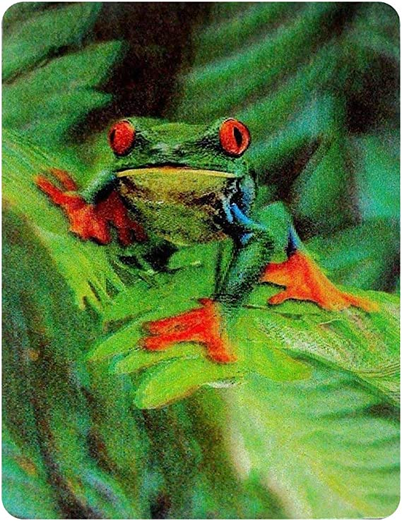 Wildlife 3D Postcard Greeting Card Red-eyed Tree Frog