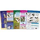 New Path Learning Owls & Owl Pellets Bulletin Board Chart Set - Set of 5