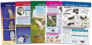 NewPath Learning-94-7006 Owls & Owl Pellets Bulletin Board Chart Set - Set of 5