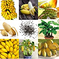 100 Unids/pack Rare Enano Plátano Semillas de árboles Mini Semilla de Bonsai Plantas de Jardín Exótico Hogar Balcón…