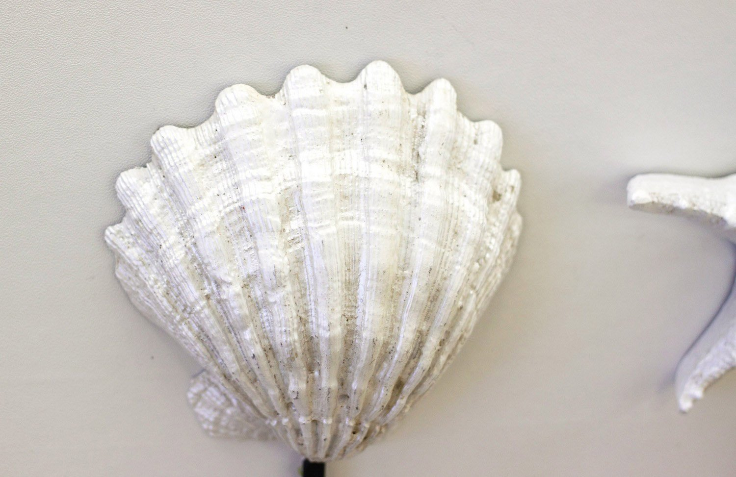 Art Scallop Shell Pieces Drip-Dry