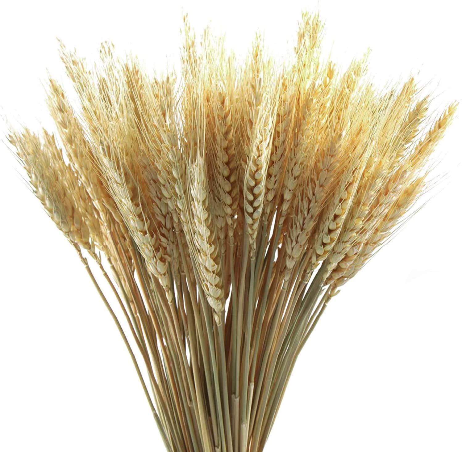 Delokey 200 Stems Dried Wheat Sheaves Stalks-Artificial Flower with Natural Ear of Wheat Grain Flowers Dry Grass Bunch DIY Arrangements for Home Wedding Store Decorative (Natural)