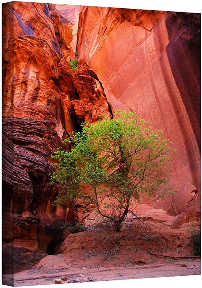 Artwall Utah Green Tree Red Canyon Gallery Wrapped Canvas Art By Dan Wilson 36 By 24 Inch Posters Prints Amazon Com
