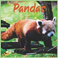 Pandas: 2021 wall & Office Calendar 16 Monthe