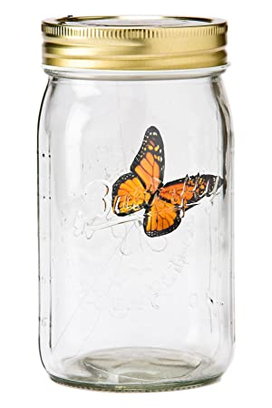amazon butterfly in a jar monarch my butterfly collection