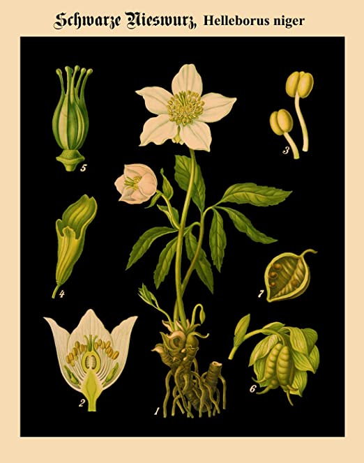 Childs 6 Vintage Seed Cover Picture Art Print Poster A4 A3 A2 A1