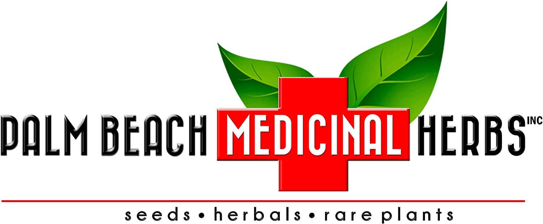 Eros Organic Escarole Seeds (Cichorium endivia) 50+ Rare Garden Vegetable Seeds