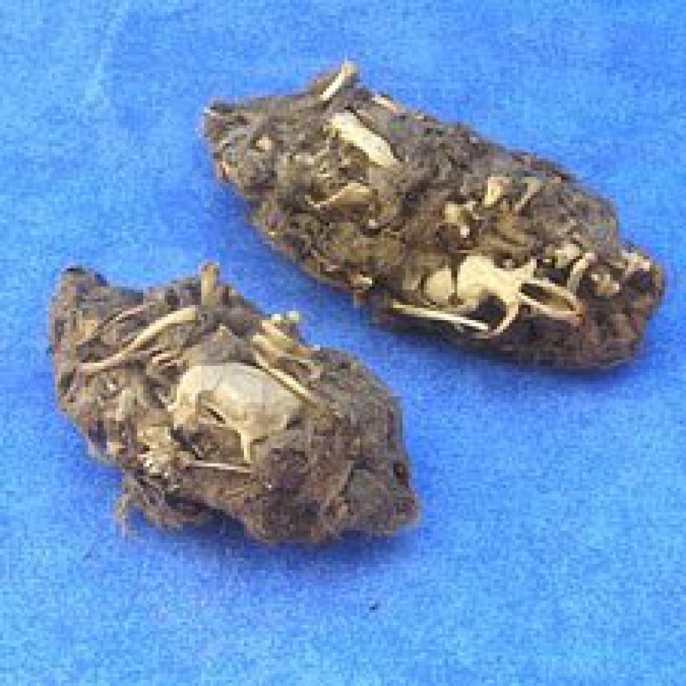 barn pellet whiskers barns owl pellets witches