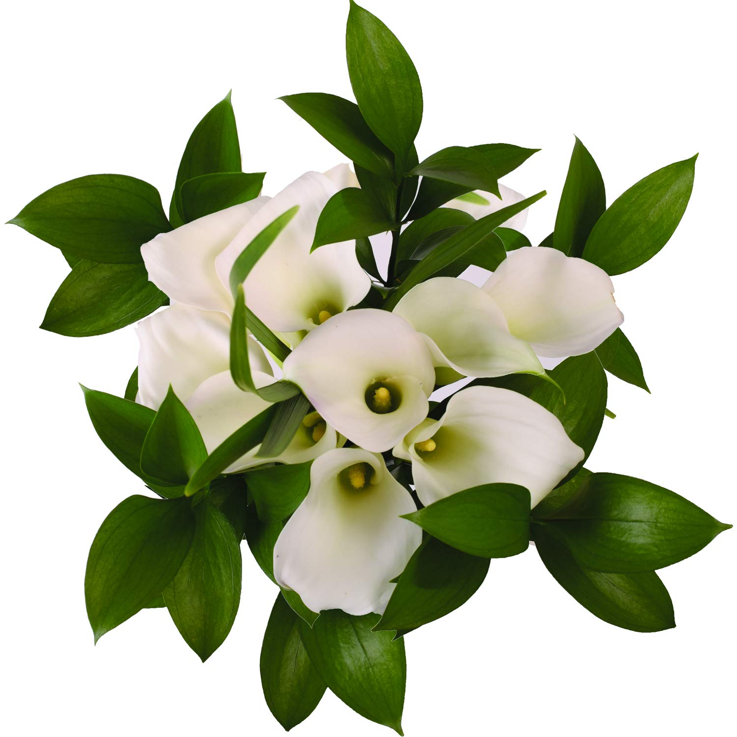Pure Elegance White Mini Calla Bouquet - 26 Stems by Bloomingmore