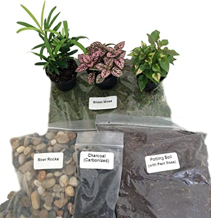terrariumfairy garden kit with 3 plants create your own living terrarium - Fairy Garden Terrarium