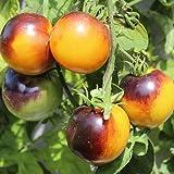 10 Samen Bluegold Tomate – saftige Früchte, außergewöhnliche Fruchtfarbe