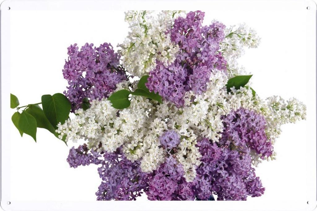 """silk flower arrangements flower tin sign lilacs bouquet white purple vase 30068 by waller's decor (7.8""""x11.8"""")"""