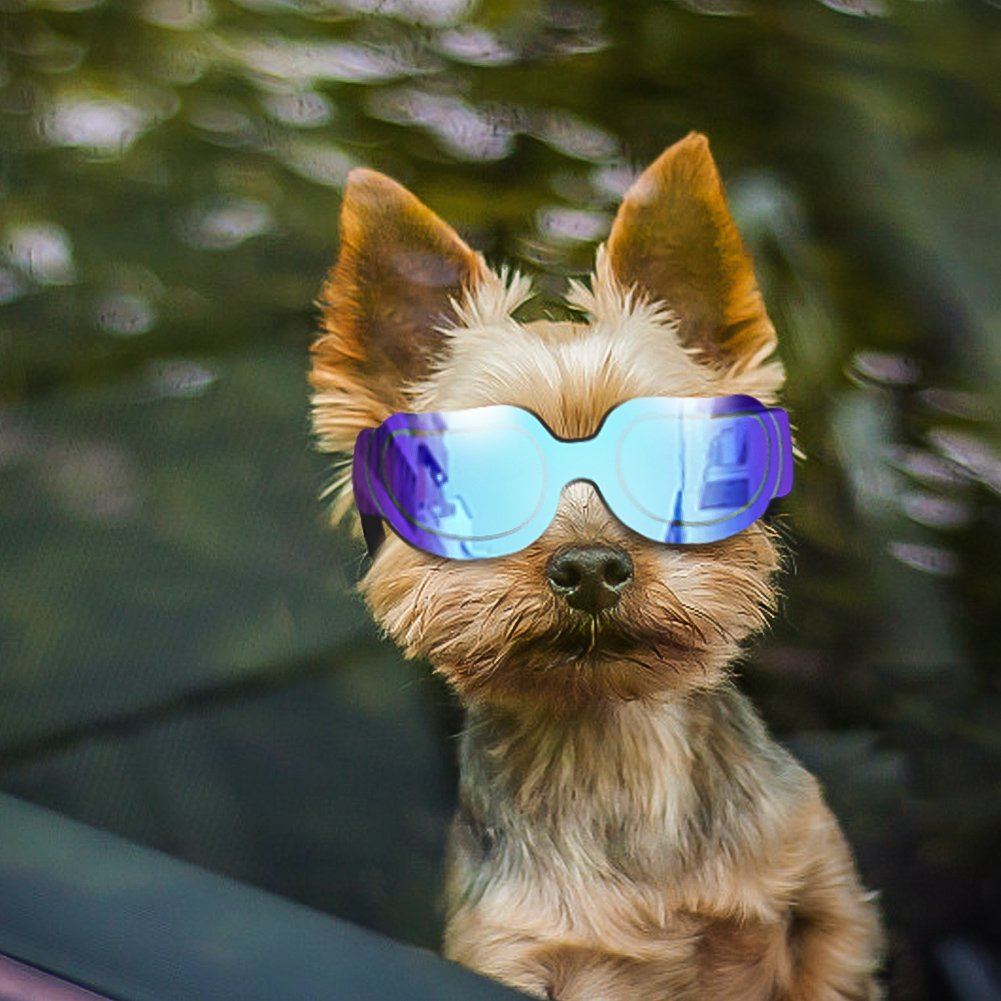 Enjoying Small Dog Sunglasses - Dog Goggles for UV Protection Sunglasses Windproof with Adjustable band for Puppy Doggy Cat - Blue
