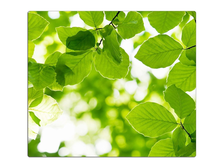60x52 cm Herdabdeckplatten aus Glas Spritzschutz Grüne Blätter