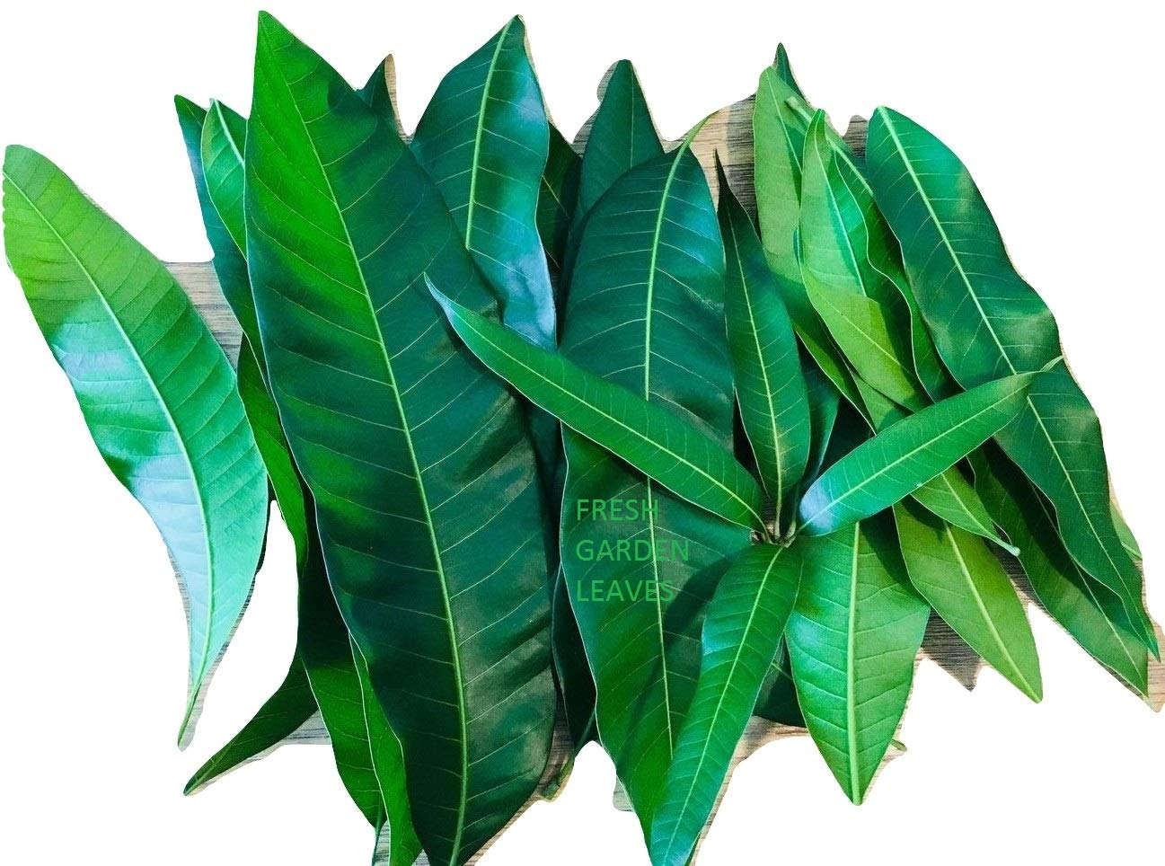 Fresh Mango Tea Leaves Organic All Natural, Ship from USA South Florida Qty 50+