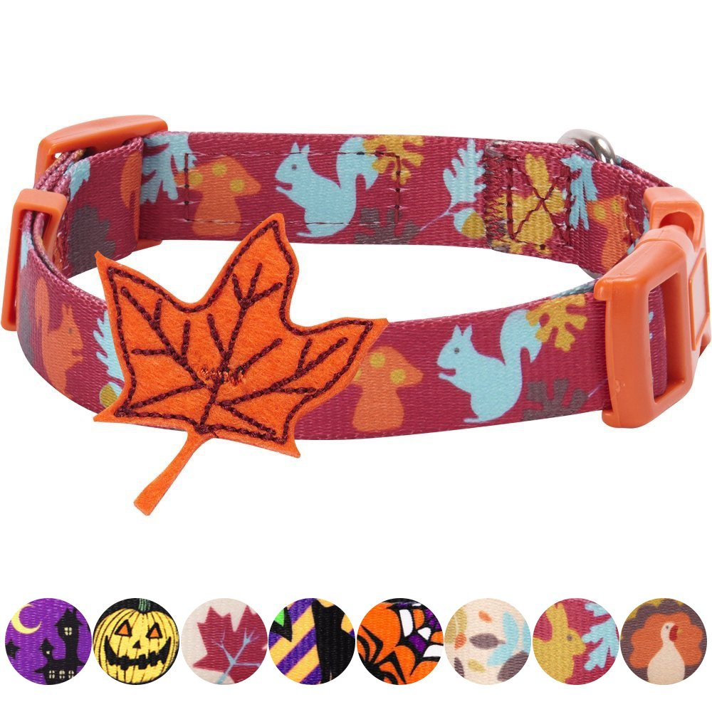 Blueberry Pet 8 Patterns Thanksgiving Fall Fun Enchanting Squirrel Designer Dog Collar with Maple, Small, Neck 12''-16'', Adjustable Collars for Dogs