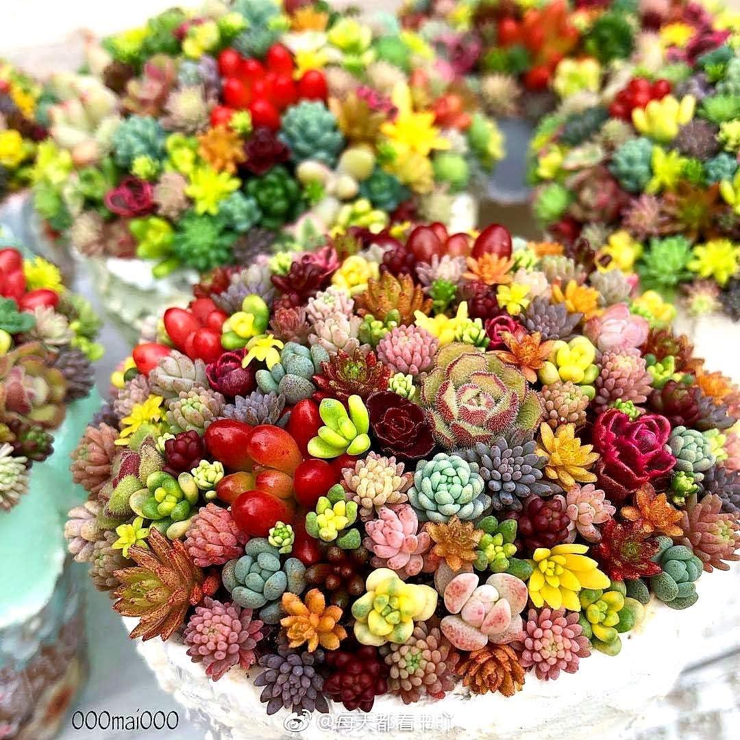 ZIXI Samen 100 st/ücke Gemischte Sukkulenten Samen Seltene Lebende Steine Pflanze Kaktus DIY Hausgarten Anti-strahlung Fleischigen Samen
