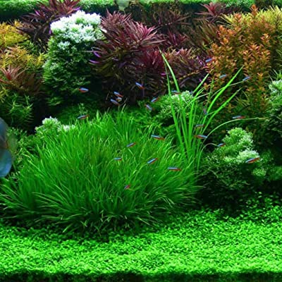 HOTUEEN 100pcs/ Bag Mixed Water Grass Seeds Aquarium Home Fish Tank Plant Decor Aquatic Plants : Garden & Outdoor